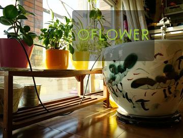 oFlower – 客厅盆花自动浇水系统